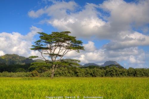 jurassic-park-kauai-hawaii